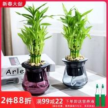 富贵竹ni栽植物 观tz办公室内桌面净化空气(小)绿植盆栽