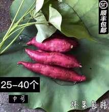 临安天目山小香薯5斤新鲜