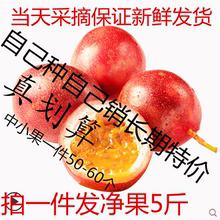 云南台or一号新鲜紫rk莲5斤装40-60个多省包邮中红果