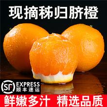湖北秭归夏橙脐橙子赣南脐