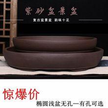 简约紫pi椭圆形促销in菖蒲水培植物客厅桌面文竹多肉组合包邮