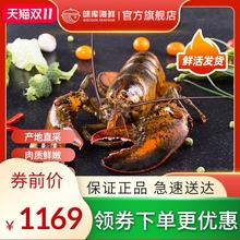 龙虾波pm顿鲜活特大ff龙波斯顿海鲜水产活虾1400-1600g