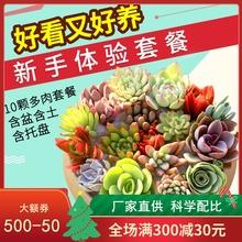 多肉植pu组合盆栽肉kj含盆带土多肉办公室内绿植盆栽花盆包邮