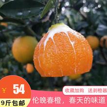秭归伦pw春橙橙子孕gy香甜多汁新鲜现摘现发当季