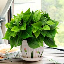 绿萝仿qu绿植套装仿ie植物家居客厅装饰盆栽摆设办公室摆件