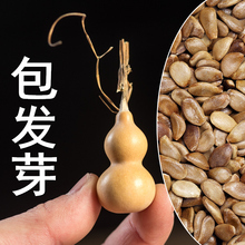 各种种qu种仔文玩手te特(小)巨型亚腰胡芦四季籽子