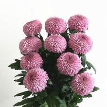 云南优ra 鲜切花鲜bi期长家庭插花鲜花速递包邮10枝