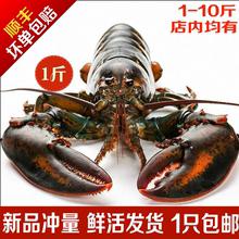 活波士ro龙虾鲜活特ie活虾450-550g龙虾海鲜水产活虾1斤 包邮