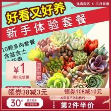 多肉植se组合盆栽肉er含盆带土多肉办公室内绿植盆栽花盆包邮