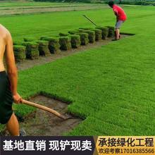 草皮真草sh1带泥土果pe青地毯剪股颖带土庭院绿化马尼拉草坪