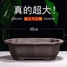 紫砂大口径榕树海棠陶瓷盆
