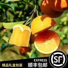 [sqhfh]江西赣州脐橙礼盒包装特产
