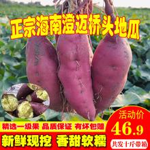 海南澄ta沙地桥头富la新鲜农家桥沙板栗薯番薯10斤包邮