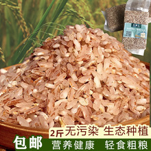 云南元ta哈尼粗粮糙sa装软红香米食用煮粥2斤不抛光