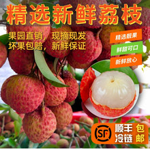 深圳南ta新鲜水果特te罂桂味糯米糍净重3斤5斤10斤包邮