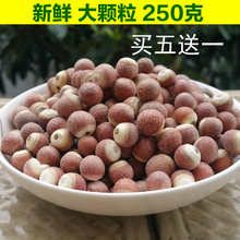 5送1te妈散装新货nd特级红皮芡实米鸡头米芡实仁新鲜干货250g