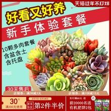 多肉植te组合盆栽肉en含盆带土多肉办公室内绿植盆栽花盆包邮