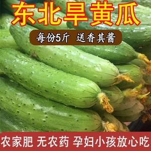 东北旱黄瓜5斤包邮 农家新鲜现摘蔬菜<span class=H>水果</span>白玉黄瓜荷兰黄瓜绿黄瓜