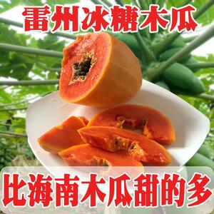 【第2件半价】广东雷州冰糖木瓜 当季青皮红心牛奶 新鲜水果包邮