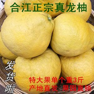 【售罄】《9月见》3-4个装约9斤包邮四川合江正宗真龙柚农家蜜柚