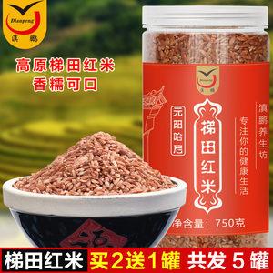 云南特产元阳哈尼梯田<span class=H>红米</span>灌装750gX2五谷粗粮红软米糙米胭脂米