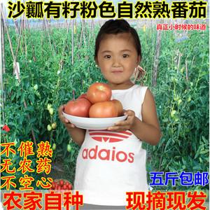 5斤包邮绿色西红柿新鲜农家番茄沙瓤自然熟洋柿子纯天然蔬菜<span class=H>水果</span>
