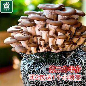 创意蘑菇菌种包邮稀有萌多肉肉绿植物趣味家庭办公室内桌面小盆栽