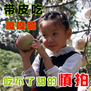 陕西红富士<span class=H>苹果</span>10斤当季冰糖心新鲜水果脆甜丑<span class=H>苹果</span>一整箱包邮萍果