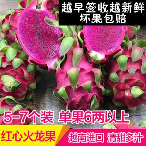 农园 越南进口红心火龙果孕妇<span class=H>新鲜</span><span class=H>水果</span>红龙果汁多中果5-7装4.8斤