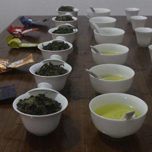 安溪铁观音试喝秋茶试喝装<span class=H>乌龙茶</span>试用体验装茶样试饮茶叶试喝包邮