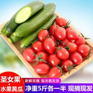 现摘圣女果<span class=H>水果</span>小黄瓜果蔬小番茄小青瓜各一半新鲜蔬菜5斤装