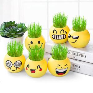 草头娃娃长小草盆栽植物创意幼儿园桌面摆件种植61儿童节可爱礼品