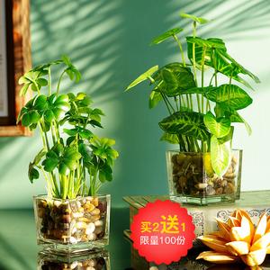如一花开仿真花摆件假四叶草小盆栽<span class=H>家居</span>客厅桌面假花装饰绿植盆景