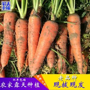 胡萝卜新鲜农家自种新鲜<span class=H>水果</span>蔬菜红萝卜宝宝辅食带泥现拔 5斤包邮