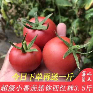 迷你西红柿 新鲜时令蔬菜<span class=H>水果</span>小番茄自然熟现摘发货酸甜多汁3.5斤