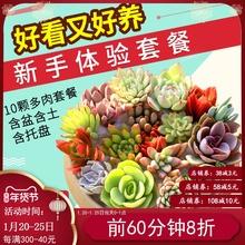 多肉植th组合盆栽肉be含盆带土多肉办公室内绿植盆栽花盆包邮