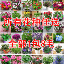 花卉种子th1种任选花da家庭种花(小)量种子花四季播满9元包邮