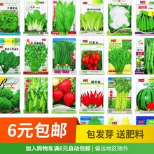 四季蔬菜菜种种子农家阳台盆栽种菜ti13种大全jf菜草莓籽孑