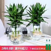 水培植tu玻璃瓶观音ay竹莲花竹办公室桌面净化空气(小)盆栽