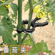 番茄架tv种菜黄瓜西jx定夹子夹吊秧支撑植物铁线莲支架