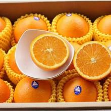 澳大利up进口橙子水ck甜澳橙当季水果整箱包邮手剥橙包邮