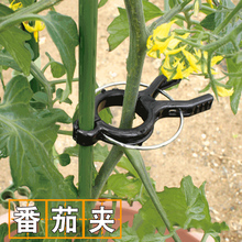 番茄架uu种菜黄瓜西wn定夹子夹吊秧支撑植物铁线莲支架