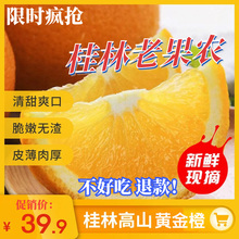 桂林老vi农新鲜10ri橙柚超甜现摘广西高山比蜜香橙赣南大