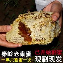 野生蜜源纯wa老巢蜜秦岭te家自产老蜂巢嚼着吃窝蜂巢蜜