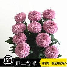 云南优wa 鲜切花鲜re期长家庭插花鲜花速递包邮10枝
