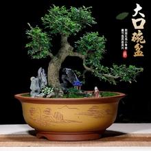 紫砂特wa口径圆形碗er多肉盆栽花盆客厅室内阳台种树盆景盆