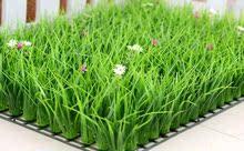 直销室wh假草坪带花re仿真绿植高草加密阳台装饰的造草皮