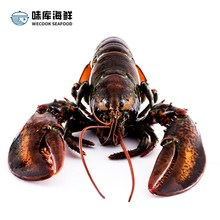 鲜活龙wo大鲜活波士ks澳洲特大波龙奥龙波斯顿海鲜水产大活虾