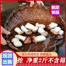 赤松茸新鲜2斤云wu5姬松茸新de邮蘑菇自家种植巴西菇松树干