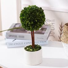 北欧iwus风四季植de室内盆栽办公室装饰创意好养懒的桌面绿植